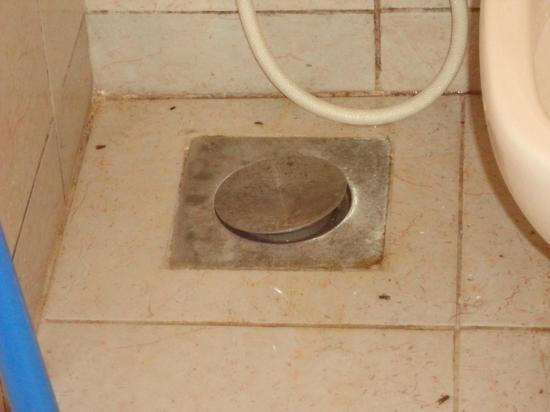 Milano Hostel: bagno con scarafaggi