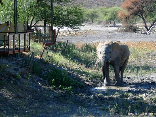 Tau Game Lodge: toller Nachbar