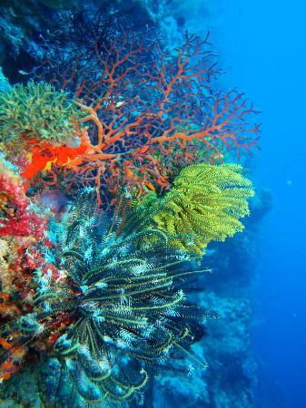 Kabaira Dive & Tours Rabaul : 透明度は総じて良い