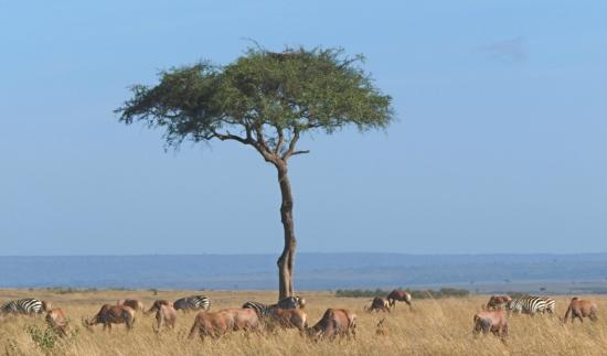 Porini Lion Camp: Herds on the Plain