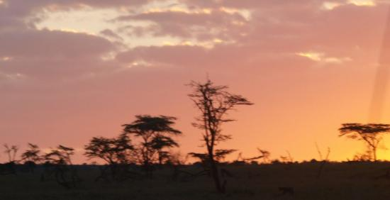 Porini Lion Camp: Sunrise