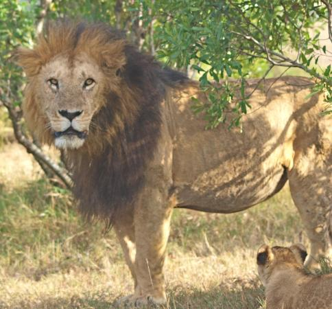 Porini Lion Camp: The famous Notch