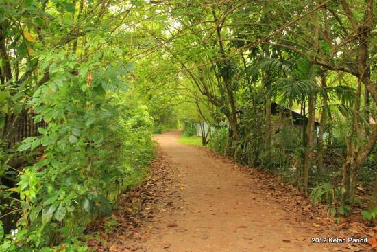 Marari Villas: Enroute to the Beach