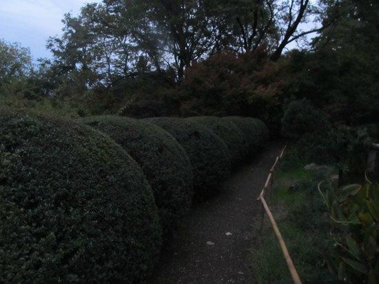 Il sentiero dei giardini giapponesi foto orto botanico for Giardini giapponesi roma
