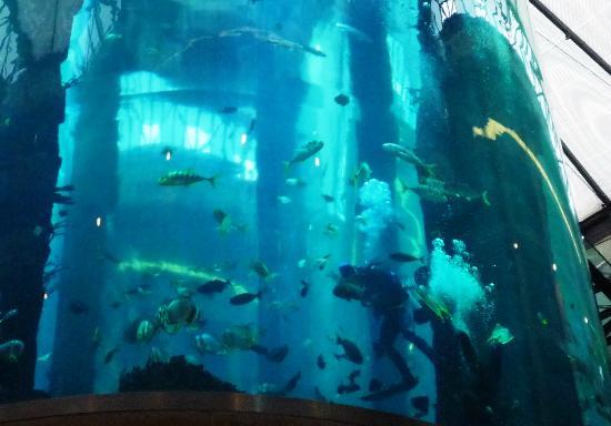 Radisson Blu Hotel, Berlin: imagen del acuario central
