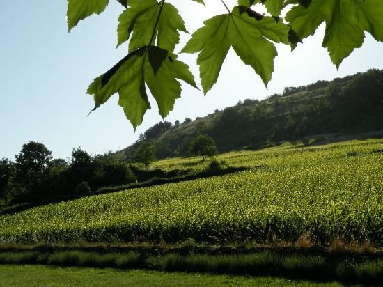 Au Clos Du Meix: View from garden over vines