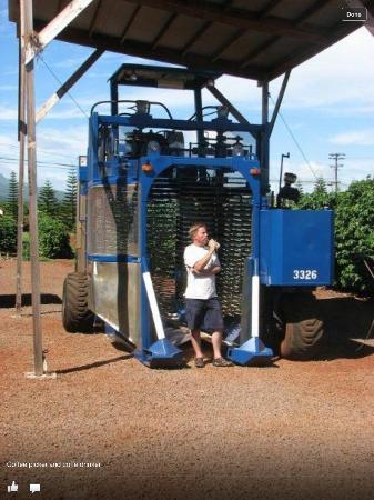 Kauai Coffee Company: Lookout! Coffee Combine coming your way.