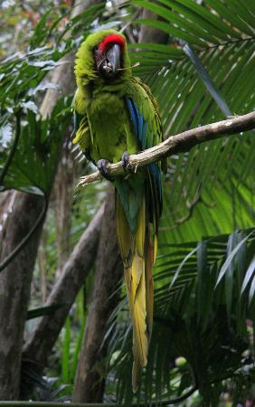 Quinta Don Fernando: Grüner Ara im Zoo
