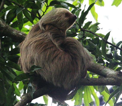 Quinta Don Fernando: Faultier im Zoo
