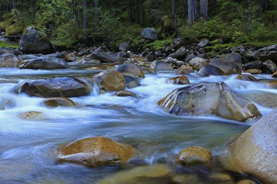 Nakusp Hot Springs: The stream below