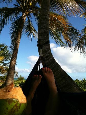 Barefoot Travelers Rooms: Bob made us coconuts for the beach and even put out a hammock for us!