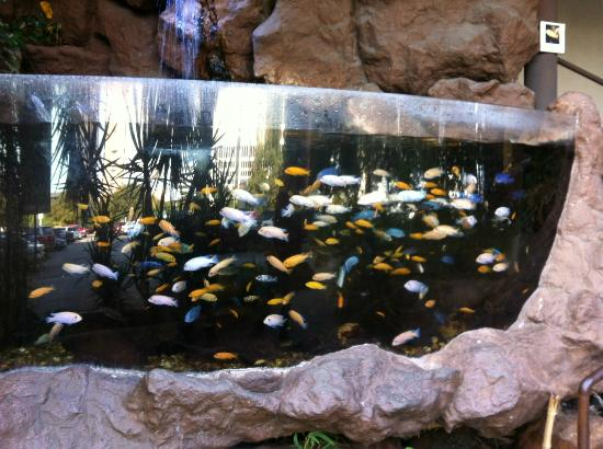 African Cichlids From Lake Malawi Picture Of Dallas