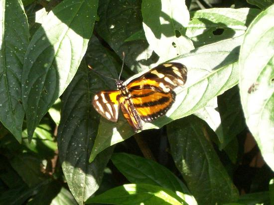 Atitlan Butterfly Sanctuary: Atitlan Butterfly Center