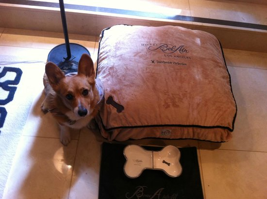 Great dog beds bowl and matt and cookies yum picture for Dog hotels in los angeles