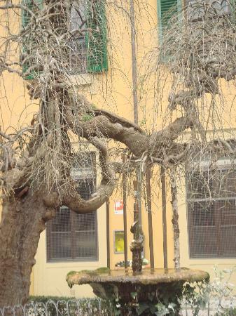 Villa Camerata Youth Hostel: Hostel