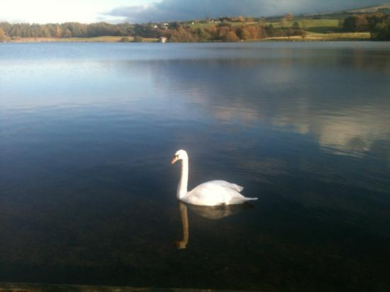 Carlisle, UK: talkin tarn oct 2012