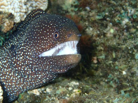 Kapoho Tide Pools: Eel