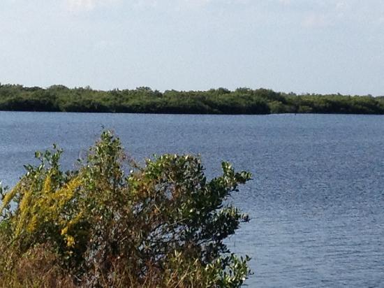 Canaveral National Seashore: The marsh area
