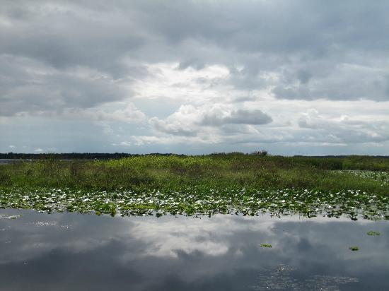 Alligator Cove Airboat Nature Tours: Natur pur