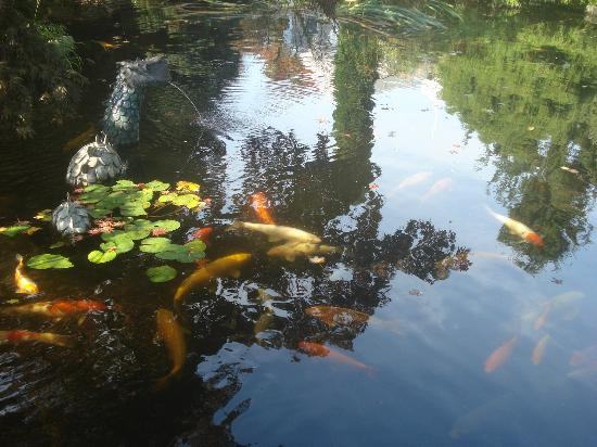 Pleasant Bay Village: Koi pond