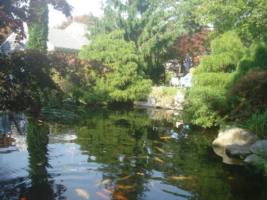 Pleasant Bay Village: Greenery aroound the Koi pond.