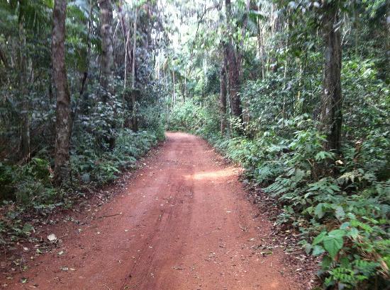 Poco Preto trail: Banana trail
