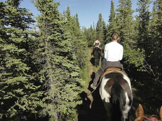 Denali Horseback Tours: Heading home ...