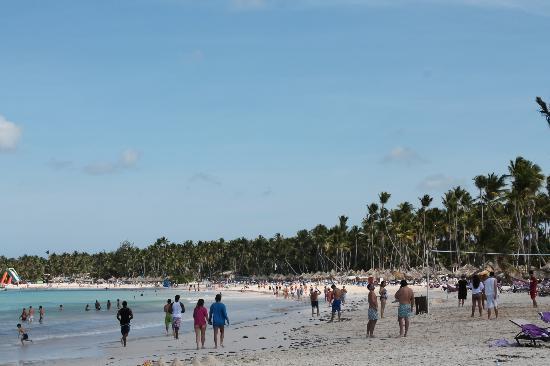 Plaza Bavaro: 海岸線成排的椰子樹