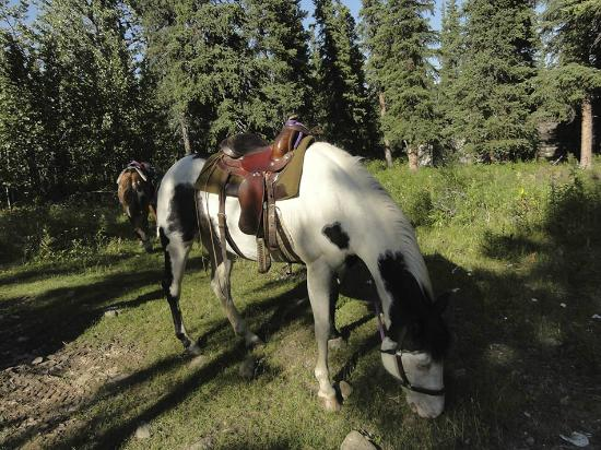 Denali Horseback Tours: Before we start....