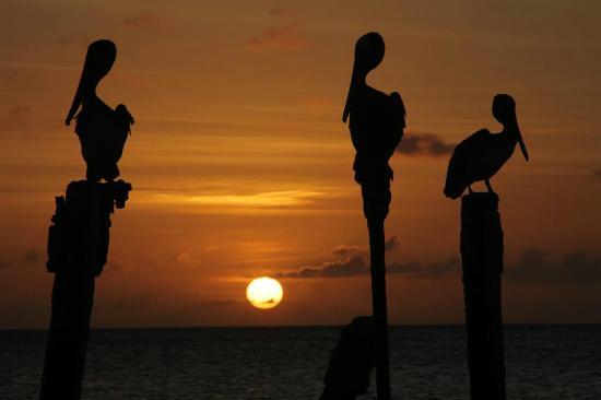 Divi Village Golf and Beach Resort: Op het strand van dit resort is een prachtige zonsondergang