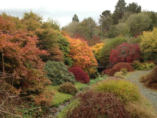 The Garden House: Acers