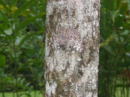 Chachagua Rainforest Eco Lodge: moth hiding against the tree.