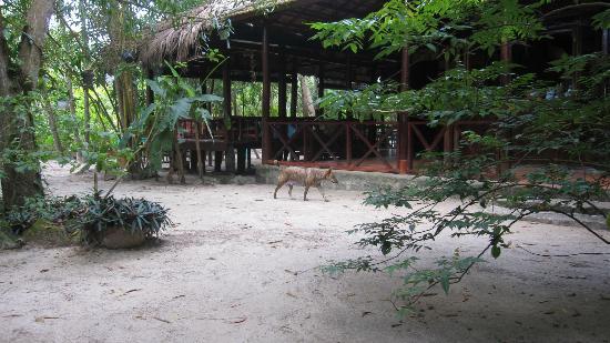 Freedomland Phu Quoc Resort: Pigi