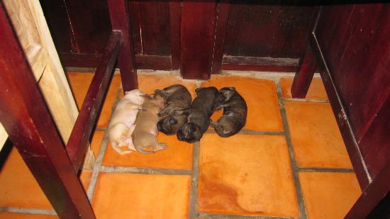 Freedomland Phu Quoc Resort: Puppies