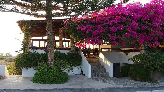 Oasis Taverna