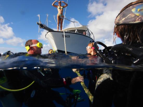 Divetech: Hanging on the mooring line, ready to descend. One DM always stays on board.