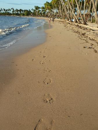Grand Bahia Principe La Romana: Playa