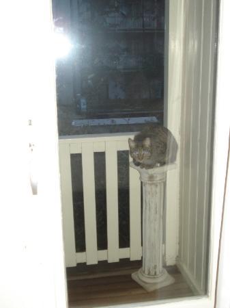 Bed & Breakfast Adriaen van Ostade: Il balcone ha la scaletta per il gatto: bellissimo!