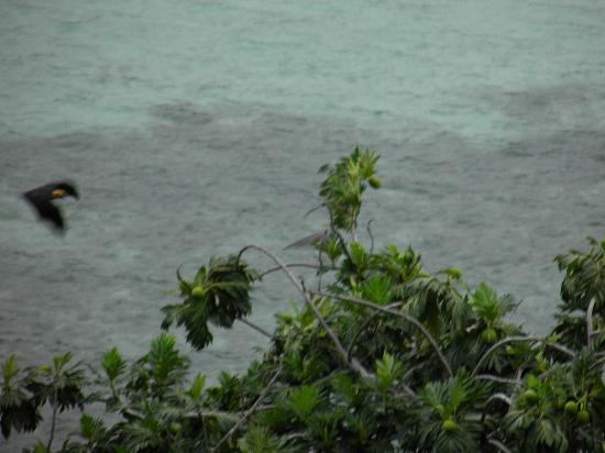 Sailfish Beach Villas: vista dal terrazzo