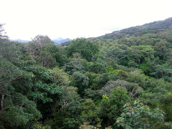 راديسون سوميت هوتل آند جولف بنما: Early morning forest view from our room 
