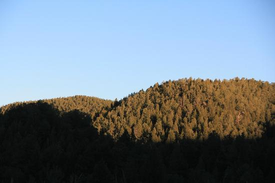 San Isabel National Forest: Shadows