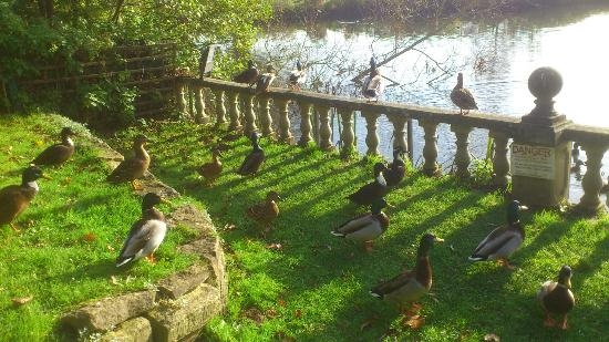Old Mill Hotel: Morning visitors