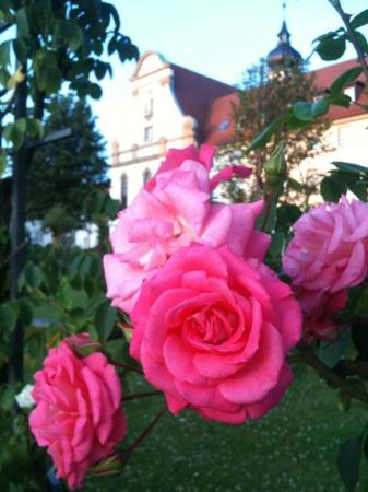 Kloster Maria Hilf: Roses in the Garden