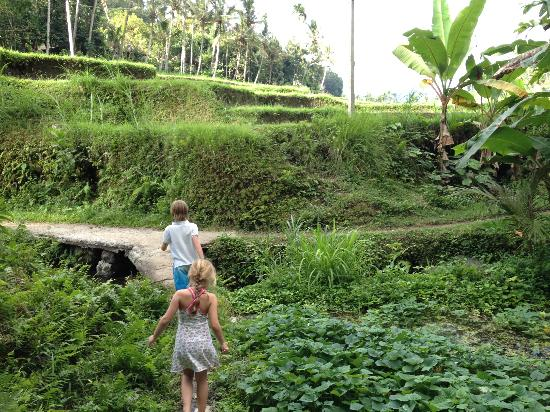 Pondok Batur Indah: Walk through the rice fields