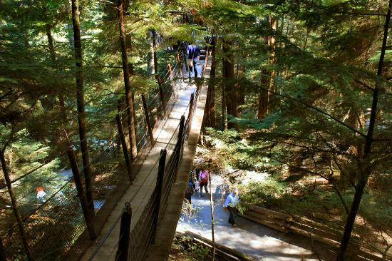 Capilano Suspension Bridge Park: Capilano Tree Walk & Forest Paths