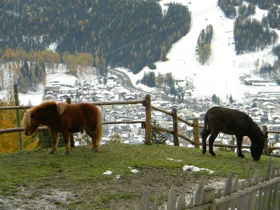 Glinzhof Mountain Natur Resort Agriturismo: Pony e asino
