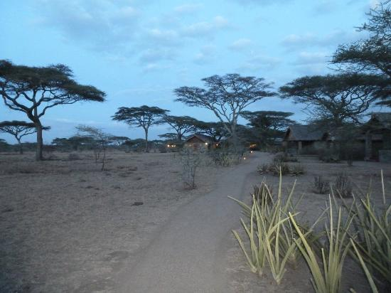 Ndutu Safari Lodge: the camp