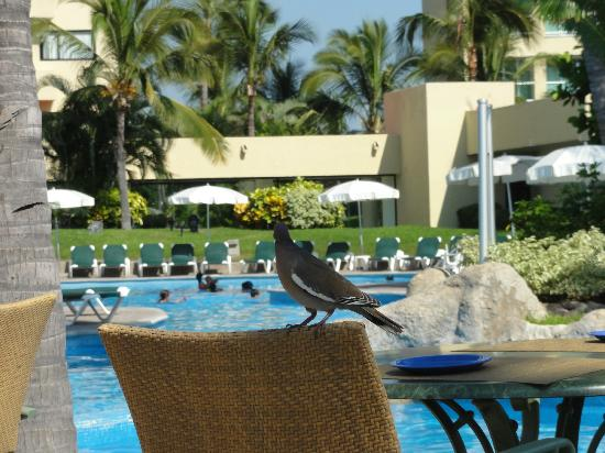 Sea Garden Mazatlan : By the pools, just sit back and relax, feed the bird!