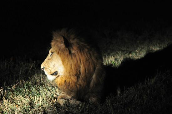 Ulusaba Rock Lodge: close at night- pretty awesome when he turned out the lights