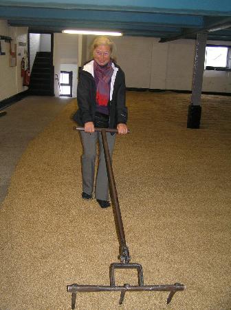 Bowmore Distillery: Turning the malting barley